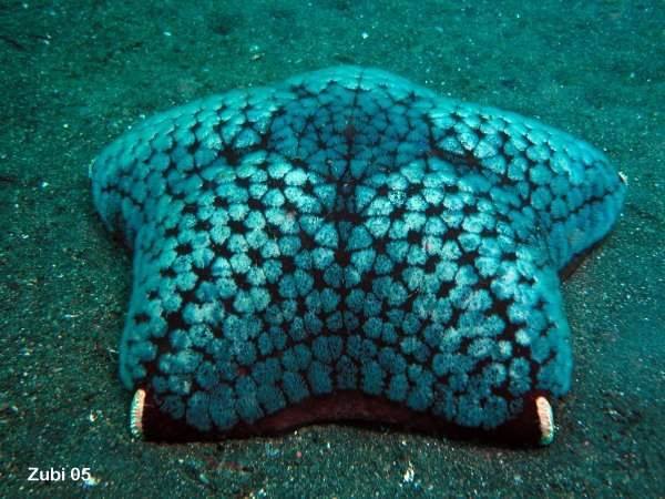 cushion star - Kissenstern